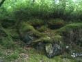 Naturwesen in Findhorn Schottland